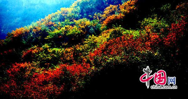 入画染秋红——河南焦作云台山红叶摄影[组图] 摄影/中国网网友 关心摄影