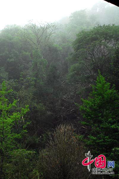 地震发生了,山体出现滑坡,山上的树木随着土石冲下山。 卧龙人/摄影