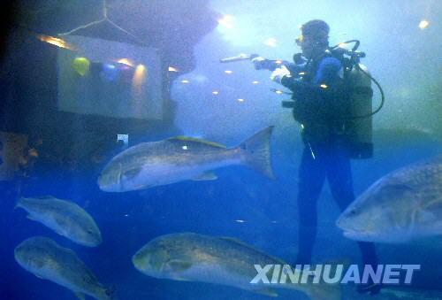 """6月28日,一名选手在海底射击比赛中。当晚,""""中国加油—2008海底奥运争霸赛""""在青岛海底世界开赛,来自青岛、济南、日照、潍坊、南京等城市的潜水爱好者在海底进行的射击、扣篮、吊环、举重、接力等项目中激烈角逐,尽情体验水下竞技的乐趣。"""