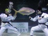 水族馆里的奥运表演