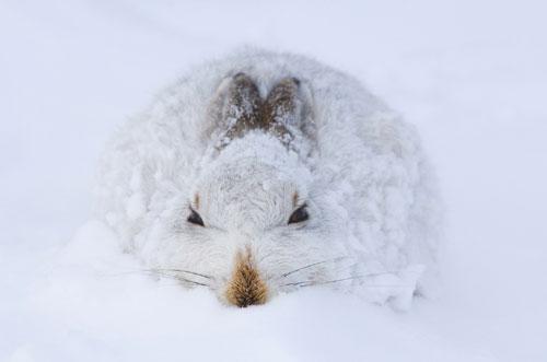 2008欧洲野生动物摄影大赛获奖作品[组图]