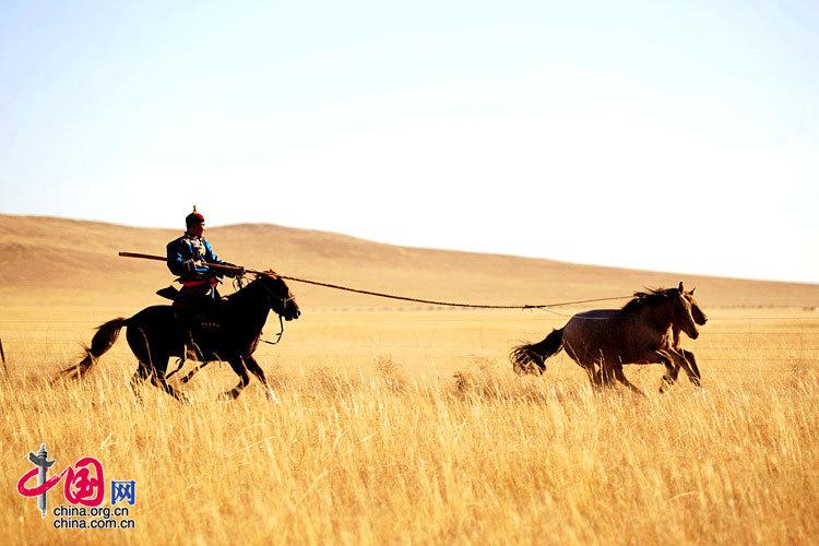 具有時代氣息的烏珠穆沁婚禮 新郎阿穆爾吉日嘎拉婚禮前一天給大家表演套馬 攝影/通拉嘎