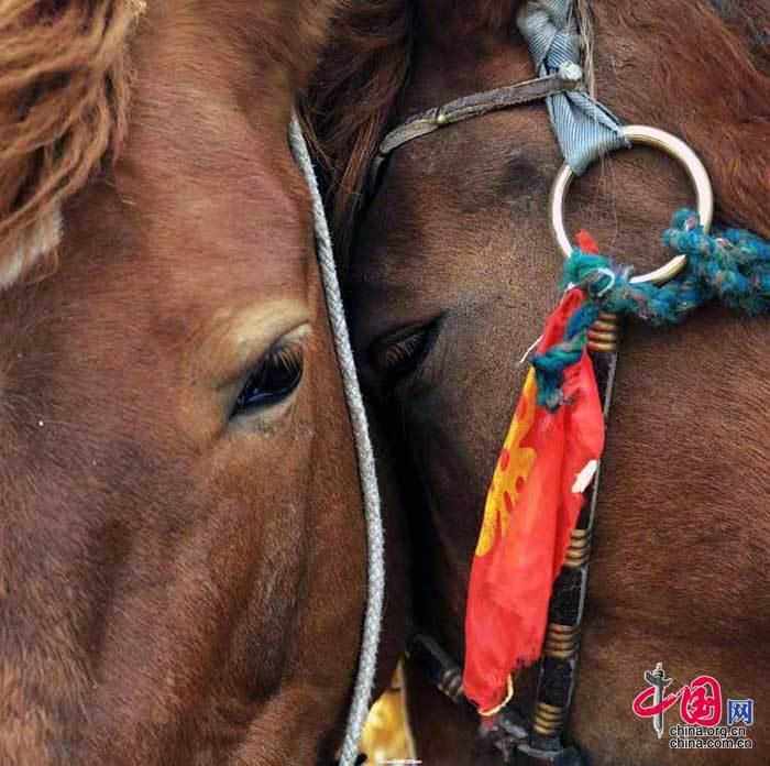 盛紅旭:改革開放30年變化——最後的馬市[組圖]