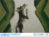 皮影动画《会摇尾巴的狼》
