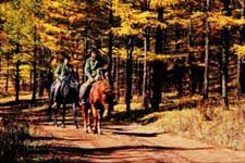 诺敏自然保护区内护林员骑马在森林里巡护