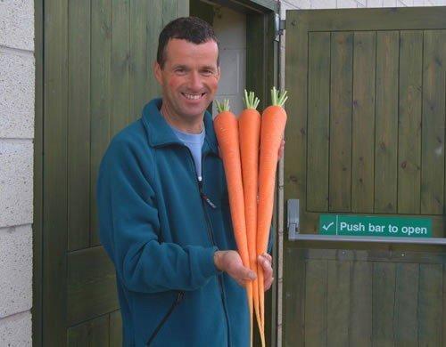 让兔子崩溃的变态萝卜