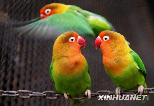 """3月1日,两只鹦鹉在南京红山森林动物园""""窃窃私语""""."""