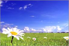 绝美风景!阳光灿烂的日子……[组图]