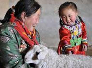 內蒙古錫林郭勒草原西烏珠穆沁旗牧民好日勞和女兒查看暖棚羊舍中的羊羔