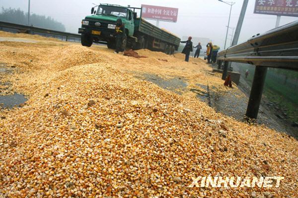 货车侧翻高速路 30吨玉米遭居民哄抢[组图]