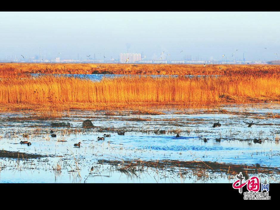 大庆龙凤湿地怎么走?