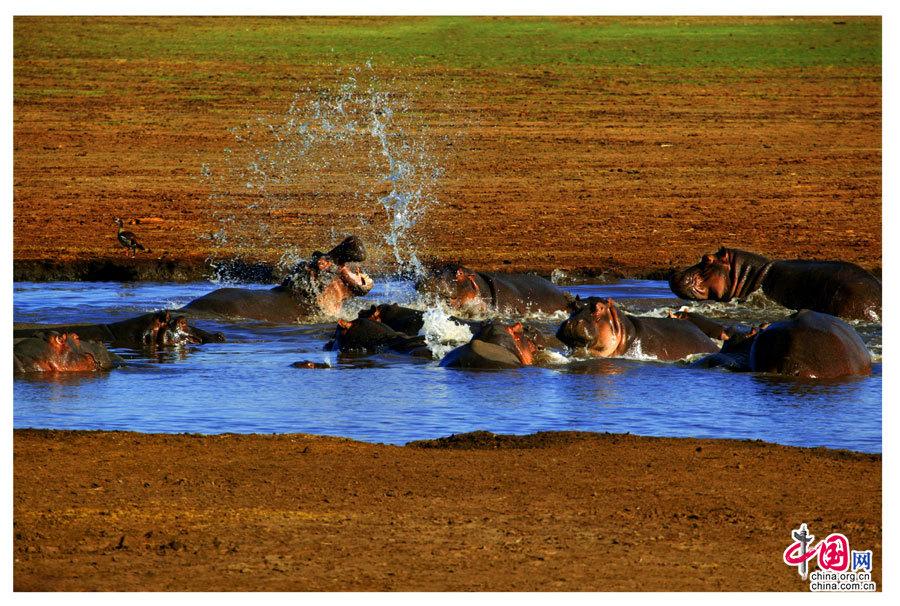 摄影师罗红镜头下的非洲绝美风景(组图)