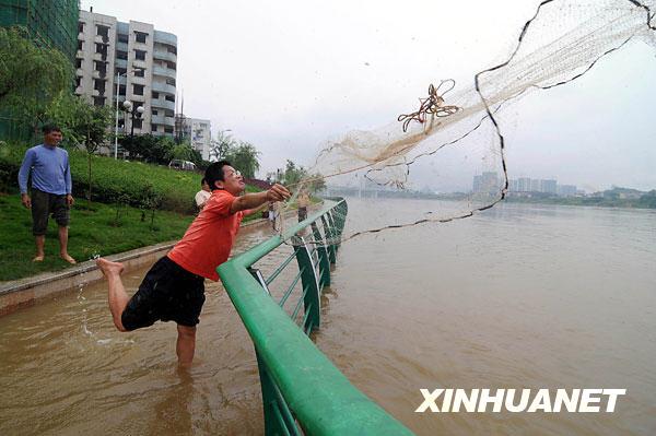 6月10日,柳州市民在柳江亲水平台上撒网捕鱼。