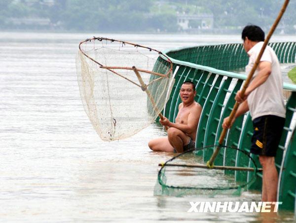 6月10日,柳州市民在柳江亲水平台上张网捕鱼。