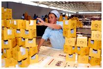 '塞上回乡'工业经济出现恢复性增长