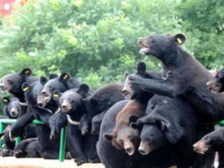 """""""熊熊的乐园""""-青岛东方熊牧场[组图]"""