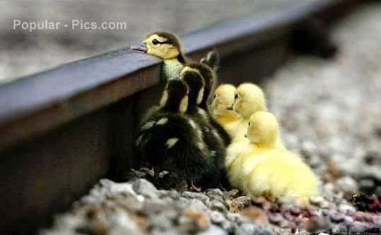 动物合影图片2