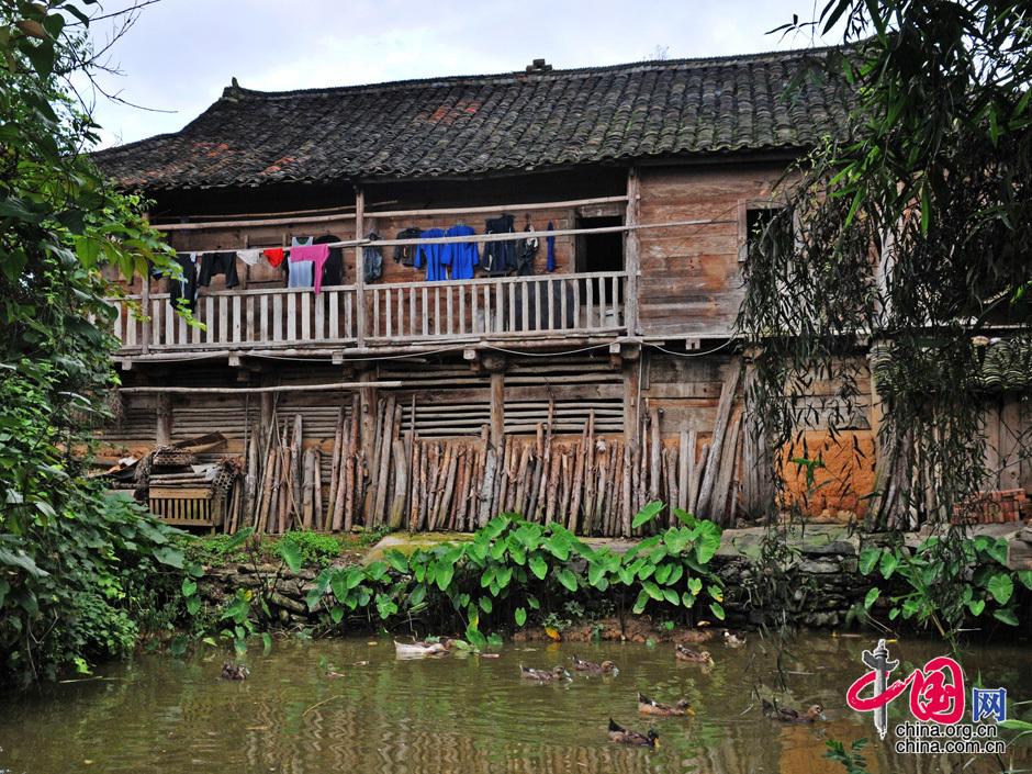 图片中国:多彩贵州魅力水族_图片中心_中国网