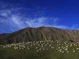 新疆美丽的夏季草场[组图]