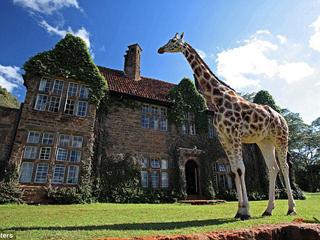 一家收养8长颈鹿 成世上唯一长颈鹿旅店[组图]
