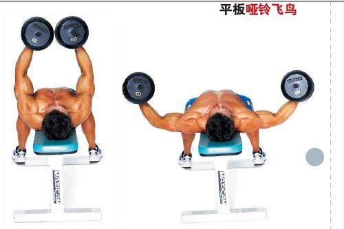 方法 胸肌/平板哑铃飞鸟:作为胸肌训练的结束动作。...