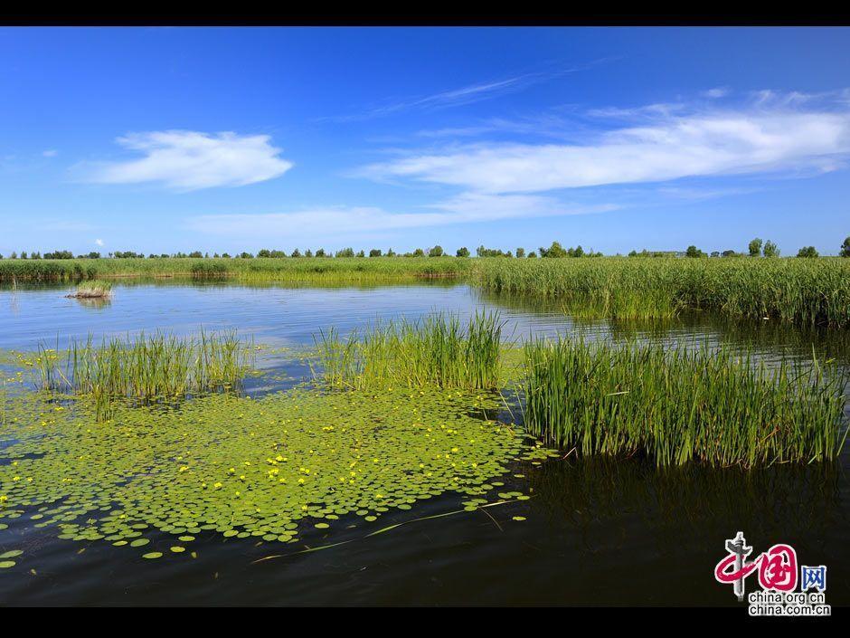 图片中国:大庆湿地鹤鸣湖上风光美 _图片中心_中国网