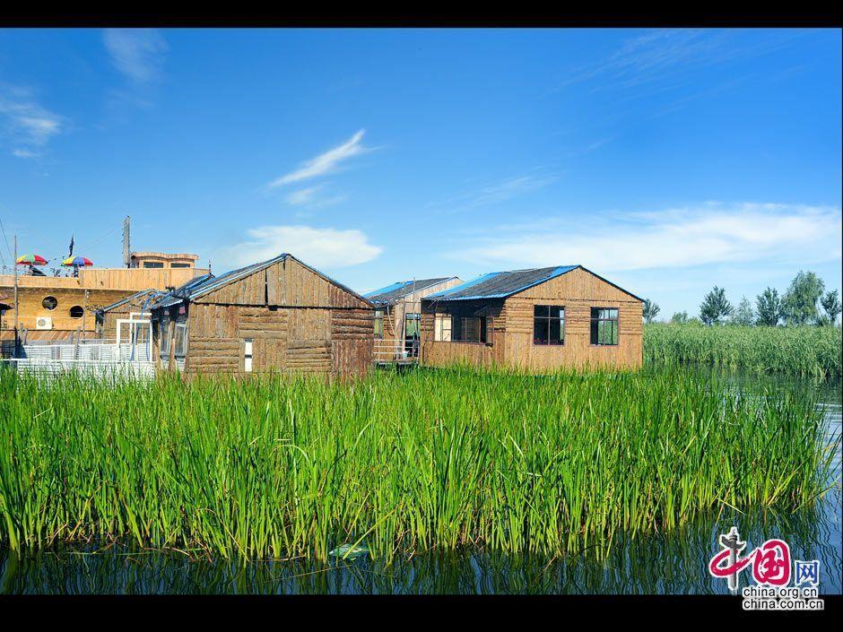 湖中美丽的芦苇和漂亮的木房子.于文斌摄影