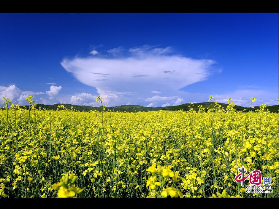 图片中国:美丽神奇呼伦贝尔夏季大草原 _图片中心_中国网