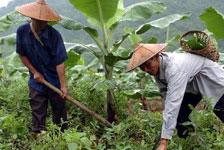 德昂族村民在劳作