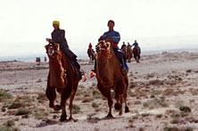 蒙古族赛骆驼