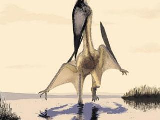 法国发现亿年前翼龙脚印化石