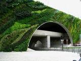 法国植物学家建造出令人惊叹的垂直花园[组图]