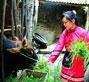 毛南族经济