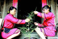 毛南族节俗 分龙节插丰收树