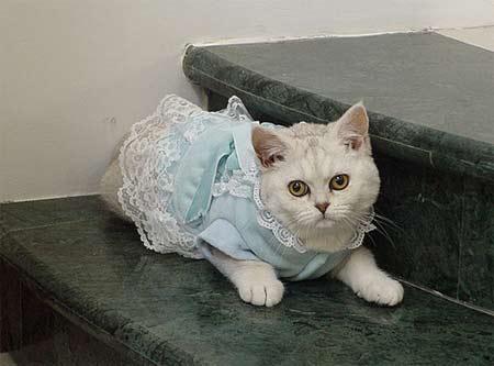 四大装饰 扮靓可爱猫咪(图)