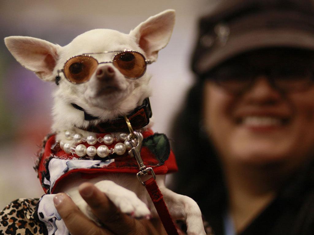 世界最大的猫狗展示会上的明星