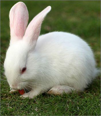 小兔子为什么不喝水图片2