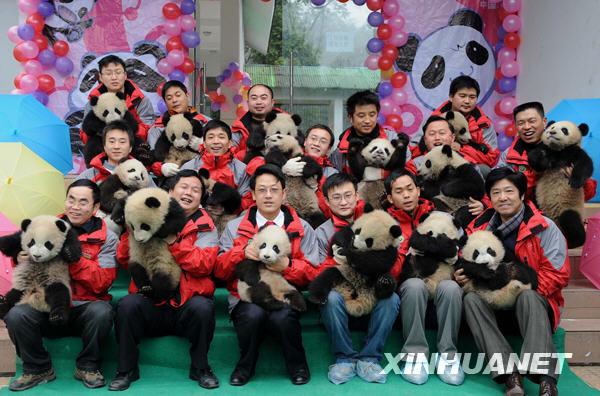 卧龙16只大熊猫宝宝进入幼儿园[组图]