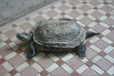 如何管理冬眠后醒来的陆龟
