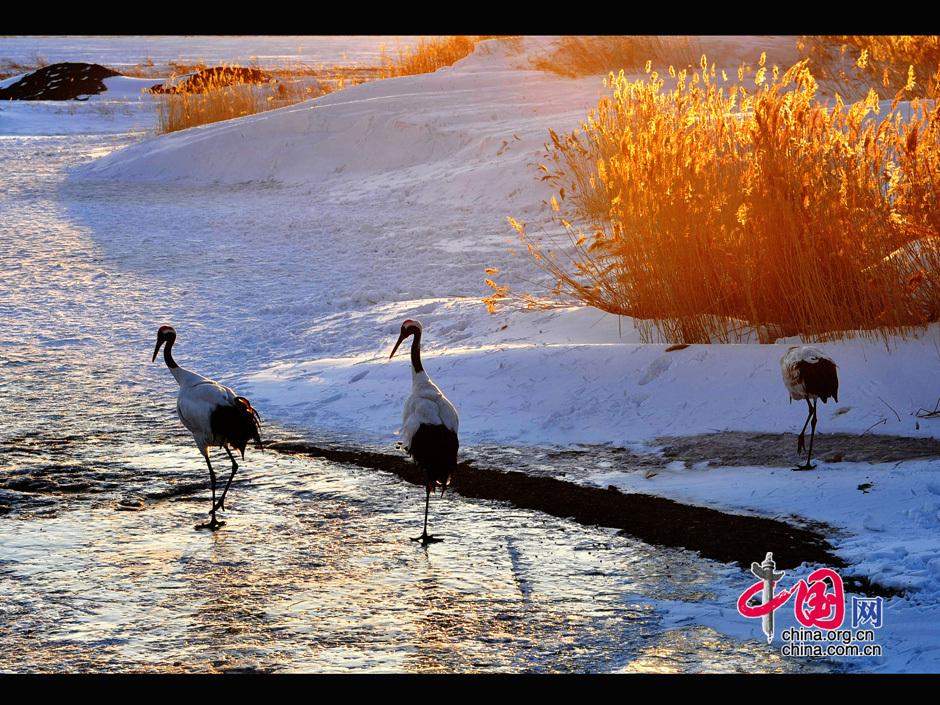 位于黑龙江省齐齐哈尔市