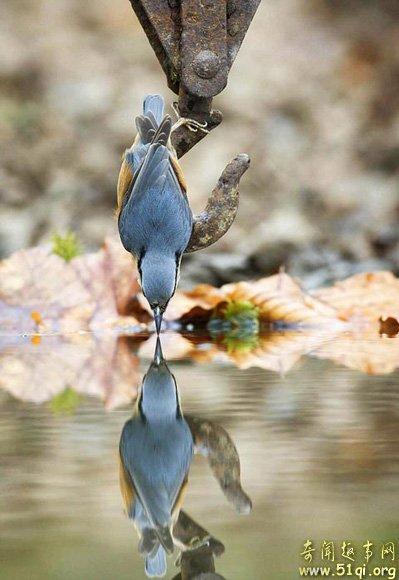 盘点:水中15个美丽的动物倒影