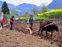 2010年3月28日,湖北宜昌市夷陵区乐天溪镇兆吉坪村的村民在田间播种玉米。