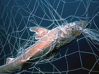 废物海洋动物手工制作