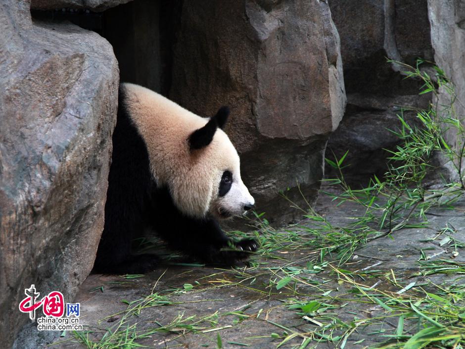 中国野生动物保护协会,卧龙中国保护大熊猫研究中心和上海野生动物园