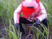 4月14日在高邮湖区里,江苏省金湖县正在组织人员冒着严寒天气开展春季查螺。金湖县位于淮河下游,与全国血吸虫病流行最北端的宝应县相邻,为血吸虫病流行区。历史有螺面积3400 万平方米,累计病人1785例。省、市主管部门一直将金湖县作为查螺工作的重县,每年要求完成600万平方米以上的查螺任务,今年更增加到890万平方米。
