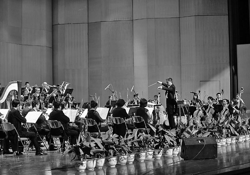 26日,在山东会堂,由青岛交响乐团举办的乐动文博交响音乐会拉开了第三届文博会的序幕。 (记者张中/摄)