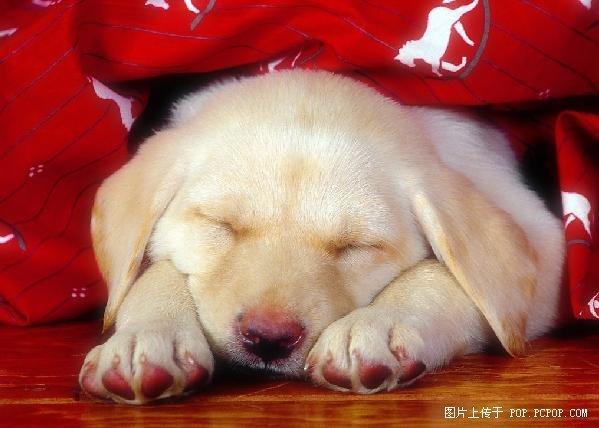高清组图:小动物超可爱睡姿 太萌了