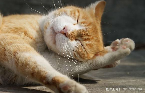 高清组图:小动物超可爱睡姿