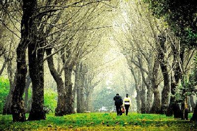冬天柳树林图片