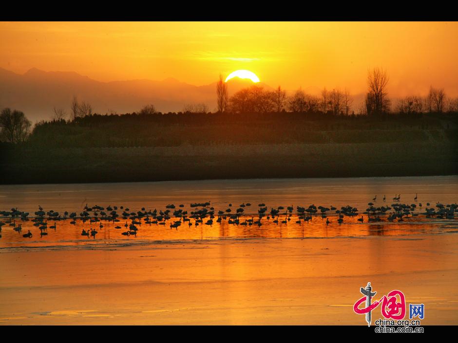 黄河湿地自然保护区有多少? - 莫家楼(大漠孤烟) - 莫家楼人的家园